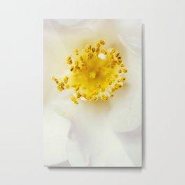 White camellia Metal Print