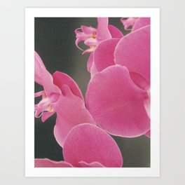 Abstract Orchids Art Print