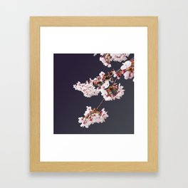 Cherry Blossoms (illustration) Framed Art Print
