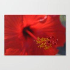Hibiscus center puff Canvas Print