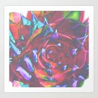 spiral aeonium Art Print