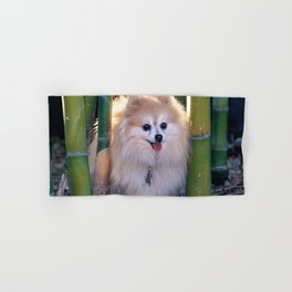 Buffy, the Celebrity Pomeranian, in Bamboo Forest Hand & Bath Towel