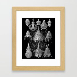 Plankton Shells (Cyrtoidea) by Ernst Haeckel Framed Art Print