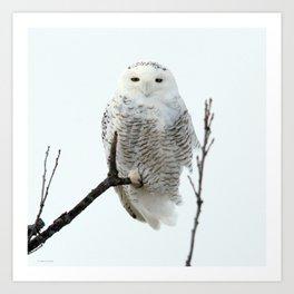 Snowy in the Wind (Snowy Owl 2) Art Print