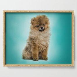 Cute Pomeranian Dog Serving Tray