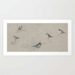 Archibald Thorburn (1860-1935)  Blue, Coal, Great, Marsh and Willow tits Art Print