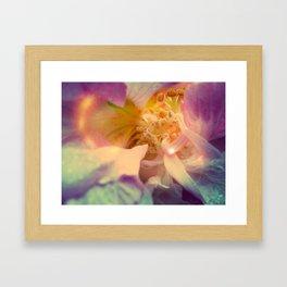 Secret Garden   Japanese rose  Framed Art Print