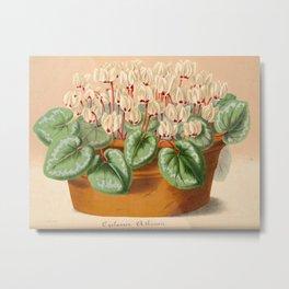 Cyclamen Atkinsil Vintage Botanical Floral Flower Plant Scientific Illustration Metal Print