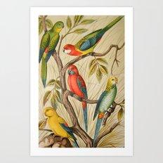 Vintage parrots Art Print
