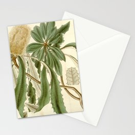 Banksia integrifolia (Coast Banksia) 1827 Stationery Cards