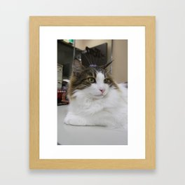 The Cat from the Cafe Framed Art Print