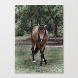 Dark Stallion Canvas Print