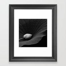 Bud on Lotus Leaf Framed Art Print