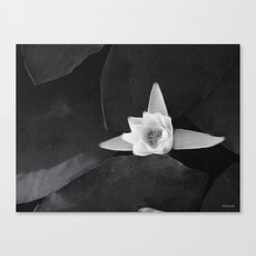 lilly black and white Canvas Print