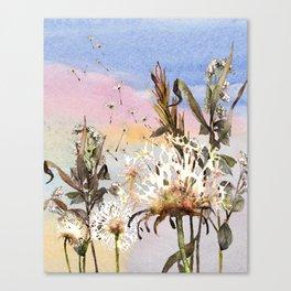 Dandelions 1 Canvas Print