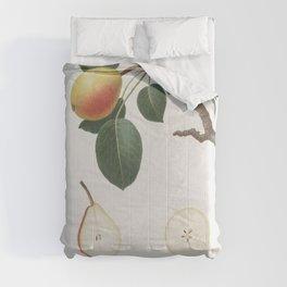 Pear (Pyrus regalis) from Pomona Italiana (1817 - 1839) by Giorgio Gallesio (1772-1839) Comforters