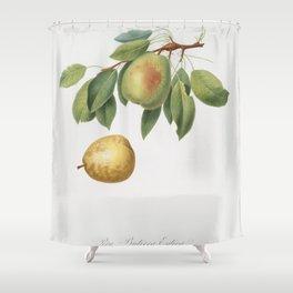 Pear (Pyrus butyra) from Pomona Italiana (1817 - 1839) by Giorgio Gallesio (1772-1839) Shower Curtain