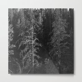 Forest - Rocky Mountain National Park Metal Print