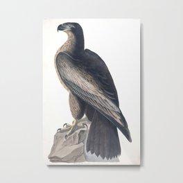 Bird of Washington (Audubon) Metal Print