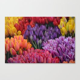 Colorful bunches of tulips Canvas Print