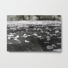 Black and White Flower Petals on Pavement Road Photograph Metal Print