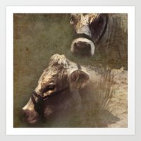 cows Art Prints featuring Cows by John Beswick