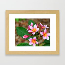 Plumeria Floral Art - Tropical Queen - Sharon Cummings Framed Art Print