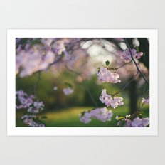 Cherry Tree Gorgeousness Art Print