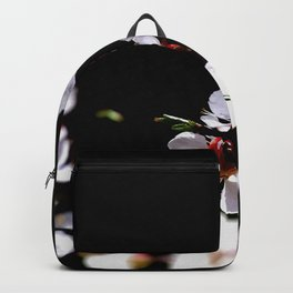 Stunning Japanese Apricot Flowers Against The Black Background Backpack