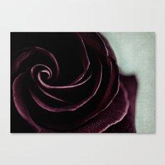 purple rose Canvas Print