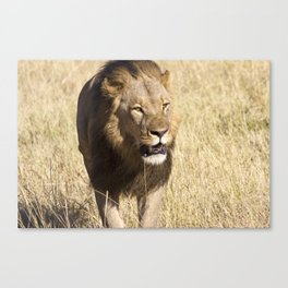 Looking for my Pride II Canvas Print