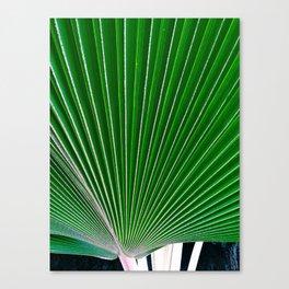 palm study Canvas Print