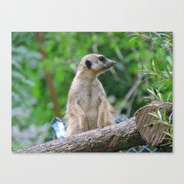 Meerkat Summers Canvas Print