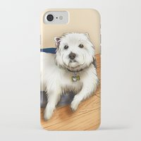 westie iPhone & iPod Cases featuring Dexter the Westie in His Doggie Bed by Circus Dog Industries