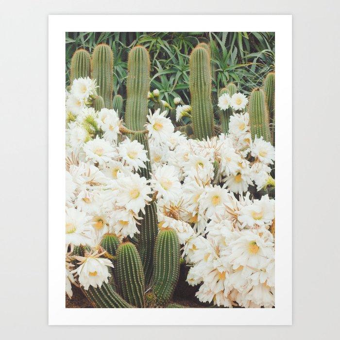 Cactus and Flowers Kunstdrucke