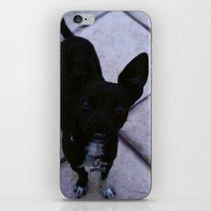 Just Dog  iPhone & iPod Skin