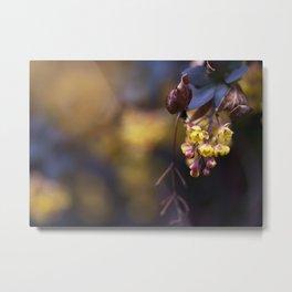 Barberry Flowers Metal Print