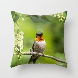 Hummingbird XVI Throw Pillow