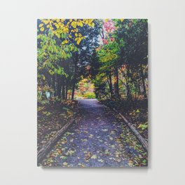 Forest paths Metal Print