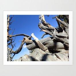 Trees and sky Art Print