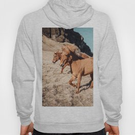 A Horse of Course Hoody