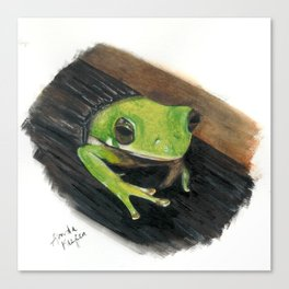 Peekaboo Tree Frog Canvas Print