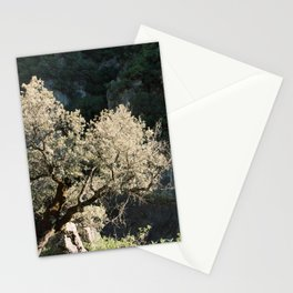 Old Olive Tree and Rocks at the Edge of a Cliff   Andalusia Nature Photography   Spain Wanderlust Vacation Stationery Cards