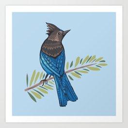 Steller's Jay Art Print