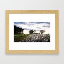 Cotton Field 9 Framed Art Print