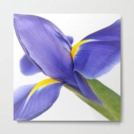 Blue Iris On White Background Metal Print