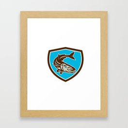 Cobia Fish Diving Down Shield Retro Framed Art Print