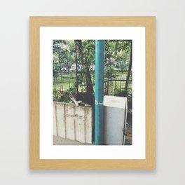 kedi.3 Framed Art Print