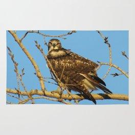 Redtail Hawk Rug