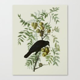 Vintage Crow Illustration Canvas Print